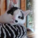 Profilbild von InEs